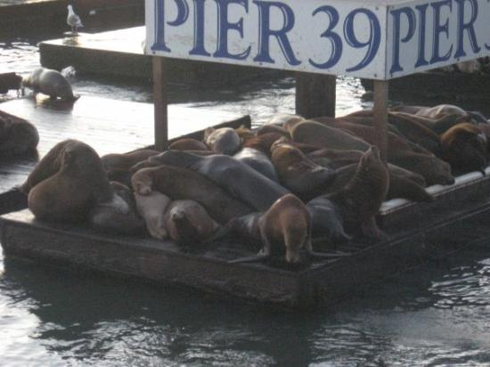 Pier 39 infamous sea lion habitat. they were laughing and talking and fighting it was very breat