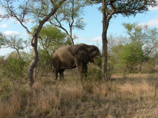 Bilde fra Thornybush Private Game Reserve