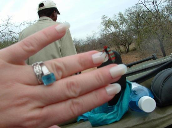 Thornybush Private Game Reserve, Sør-Afrika: Check out the neat bug on my ring finger!