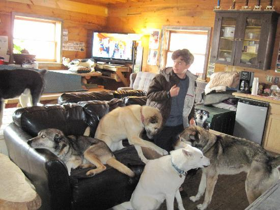 Eden Dogsledding: Hanging with the dogs before sledding