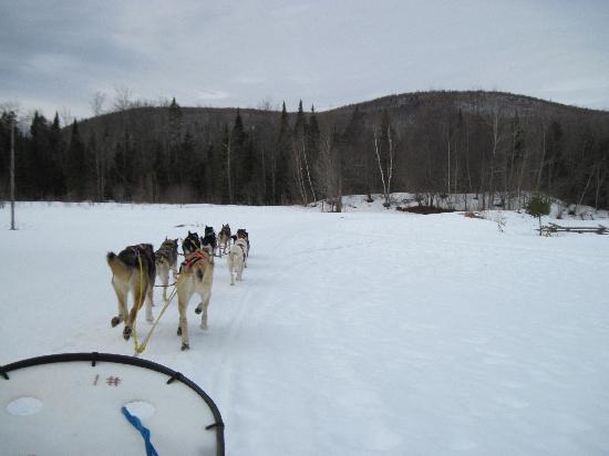 Eden Dogsledding: Beautiful ride through the mountains