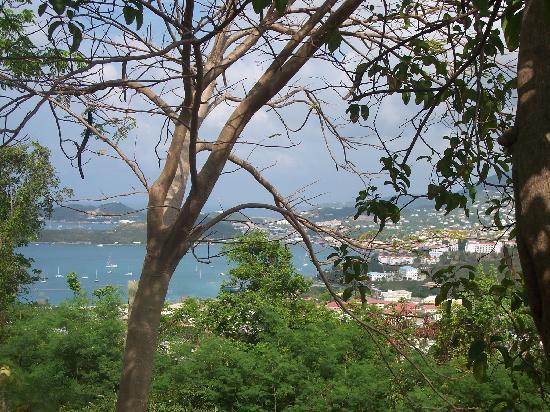 Villa Blanca Hotel: View from Tree House at Villa Blanca