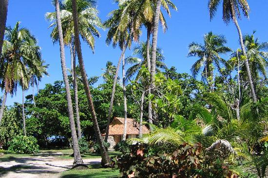 Mana Island Resort: Island Bure through the trees