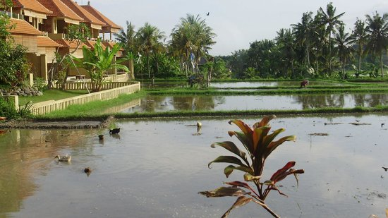 Green Field Hotel and Bungalows: The beautiful view from our room!
