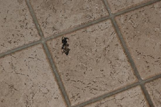 Ramada Edmonton South : Floor Stain