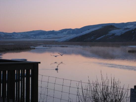 Jackson Hole Eco Tour Adventures: flying geese