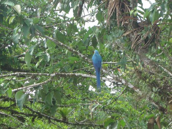 Arenal Hanging Bridges: Pretty bird spotted from the parking lot