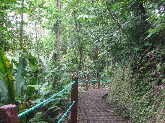 Arenal Hanging Bridges: The jungle path