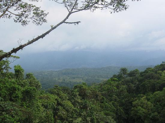 Arenal Hanging Bridges: I think the volcano is somewhere in there...