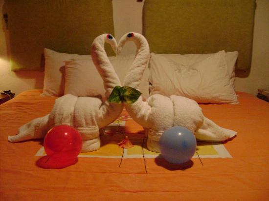 Hotel B&B by Playa del Karma: swan love