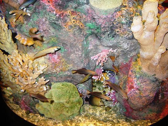 Monterey Bay Aquarium: Seahorses