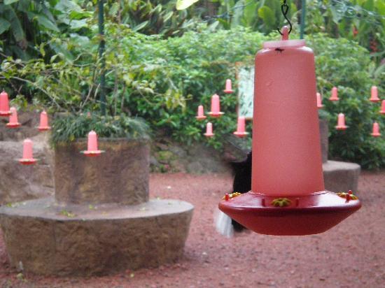 Peace Lodge: bird feeders