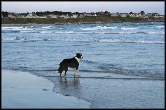 Bilde fra York Beach