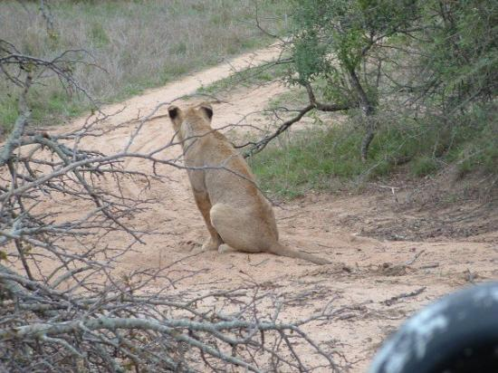 "Thornybush Private Game Reserve, Sør-Afrika: Something caught the ""little one's"" eye."