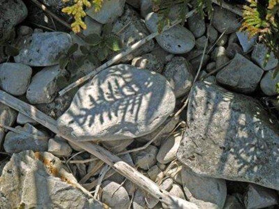 Mackinac Island, MI: Fern shadow in limestone near shore on Lake Huron
