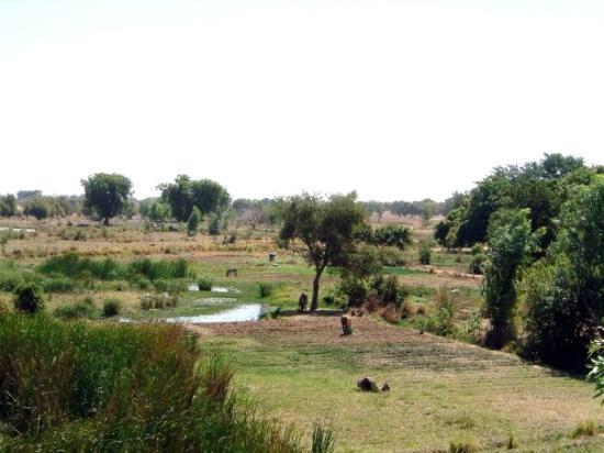 Koupela, بوركينا فاسو: L'agriculture au village