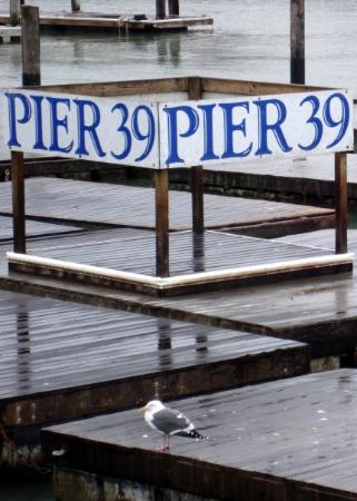 Bilde fra Pier 39