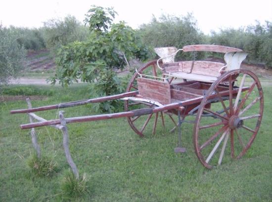 Mendoza, Argentina: my dad's farm...