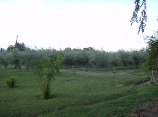 Mendoza, Argentina: My dad's farm