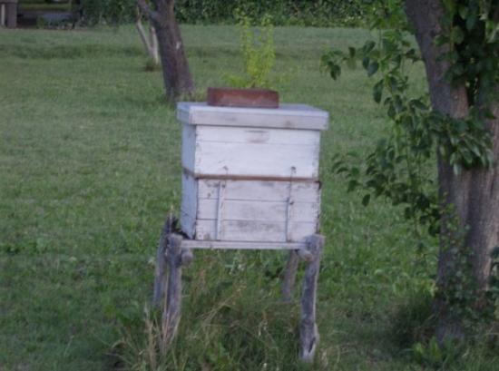Mendoza, Argentina: our honey box