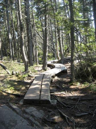 Bilde fra Acadia National Park