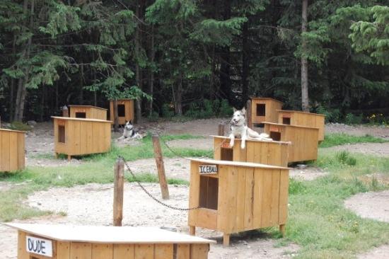Mushers Camp - Dyea, Alaska near Skagway