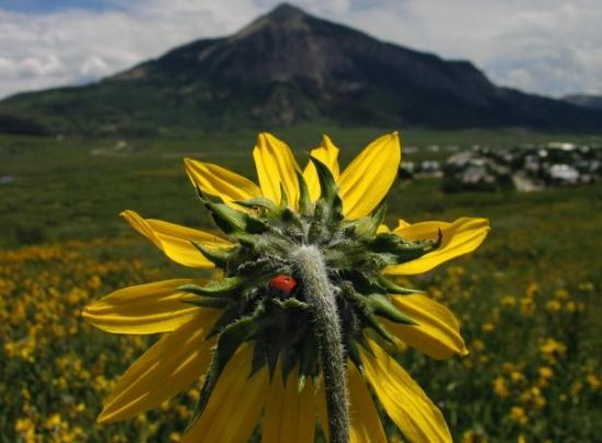 Ladies of all kinds love a great view of Mt. Crested Butte ;)