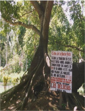 Veracruz, Mexico: This is supposed to be the actual tree that Hernan Cortez used to tie his boat when he first arr