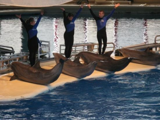 Baltimore, MD: Yay dolphin show!