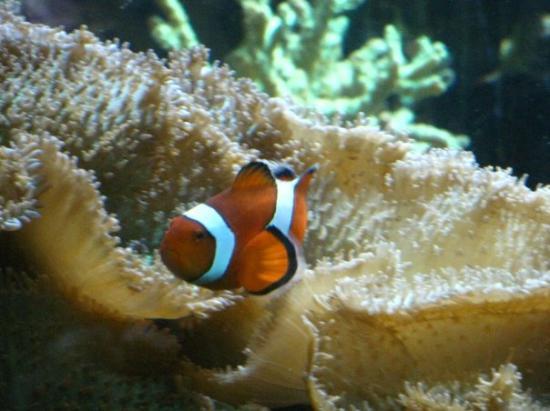 Baltimore aquarium picture of national aquarium for Maryland freshwater fish