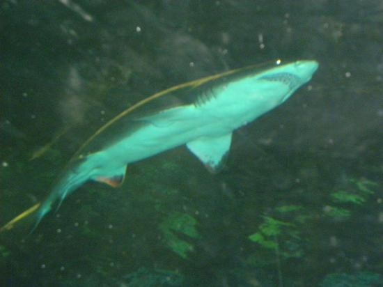 SeaWorld Orlando: it's a shark