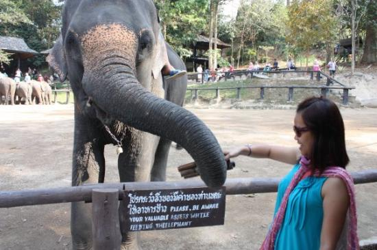 Maesa Elephant Camp: ko dah puas menari...skang ko nak makan kan..