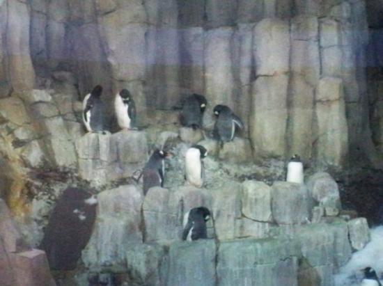 Biodome de Montreal: Penguins
