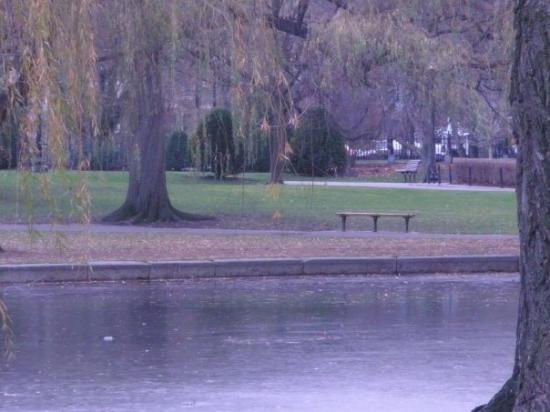 Boston Public Garden: A willow tree...I love this park