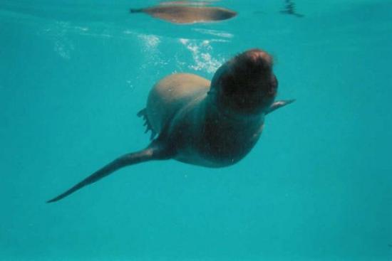 Espanola, Ecuador: Sea lions, Galapagos islands, 2003