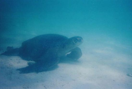 Espanola, Ecuador: Galapagos islands 2003