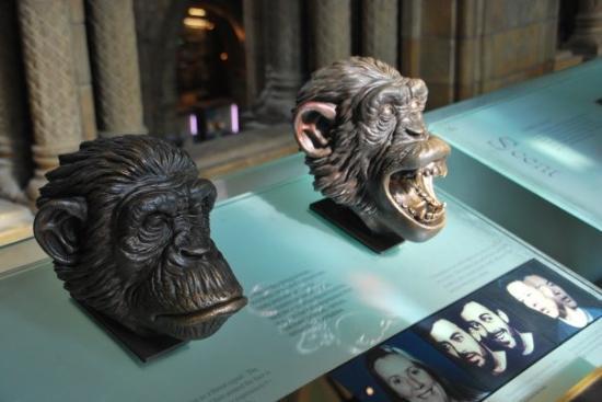 Bilde fra Naturhistorisk museum