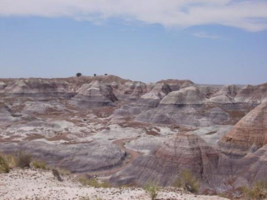 Holbrook, AZ: Painted Desert