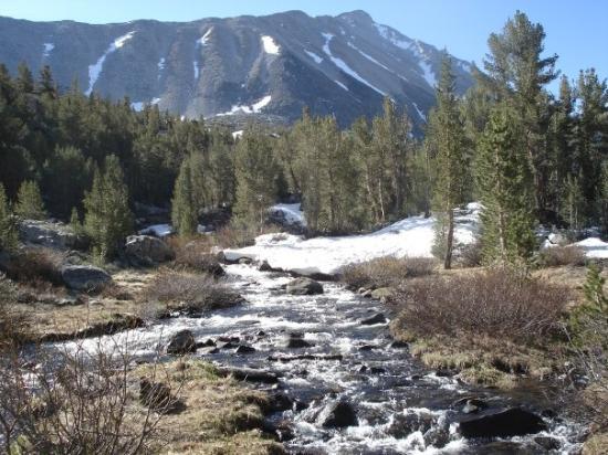Mammoth Lakes, CA: Rock Creek in June