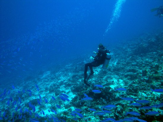 Meeru Island Resort & Spa: Natasha surrounded