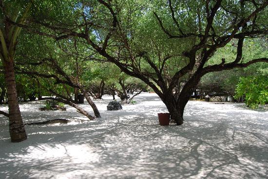 Taj Exotica Resort & Spa: Enchanted Walk