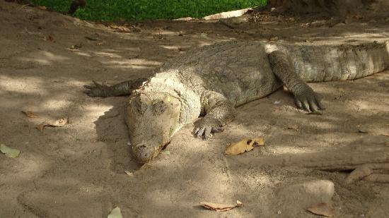 Summer Grove Villa: Crocodile Pool