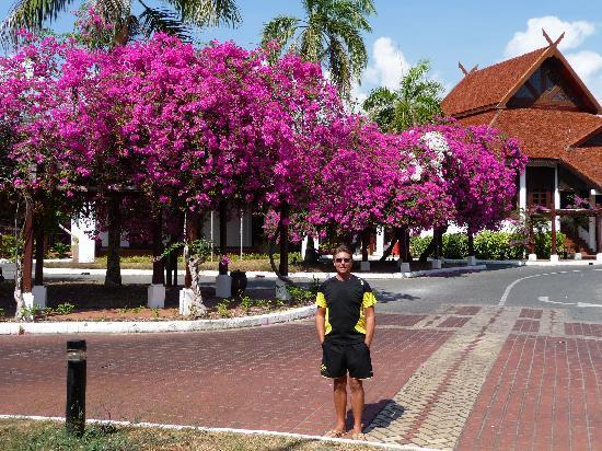 Meritus Pelangi Beach Resort & Spa, Langkawi: Beautiful trees outside recetion