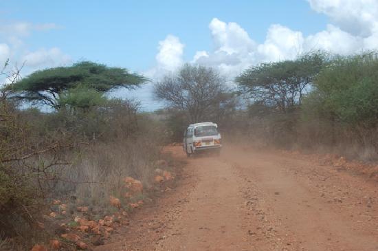 game drives at tsavo east antsafaris.com