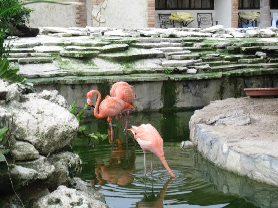 IFA Villas Bavaro Resort & Spa: flamingos in the pond by the theatre
