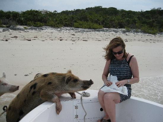 Fowl Cays National Park: Piggy Beach