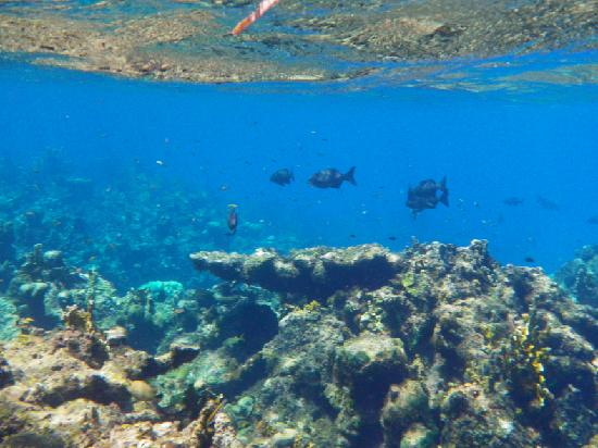 Sandals Royal Caribbean Resort and Private Island: Snorkelling