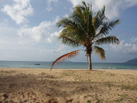 Berjaya Tioman Resort - Malaysia: palms