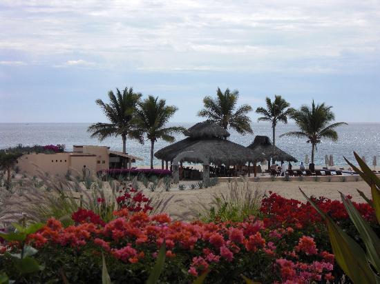 Casa del Mar Golf Resort & Spa: Bougainvillea plants on walkway to adult pool