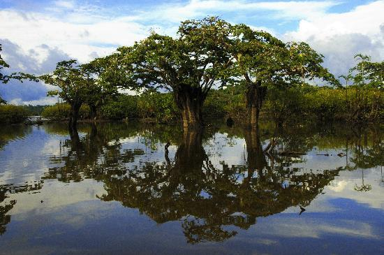 Manatee Amazon Explorer: Cuyabeno